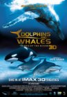 Dolphins and Whales 3D: Tribes of the Ocean Posteri